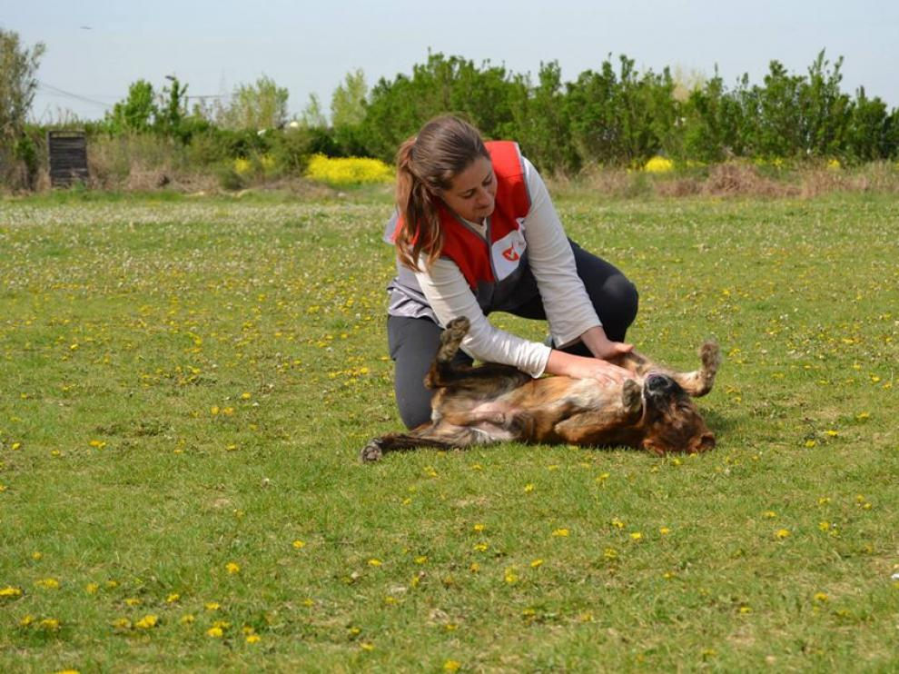Un 96% de los animales de la protectora municipal fueron adoptados en 2013