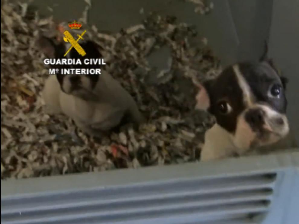 Uno de los cachorros encontrados