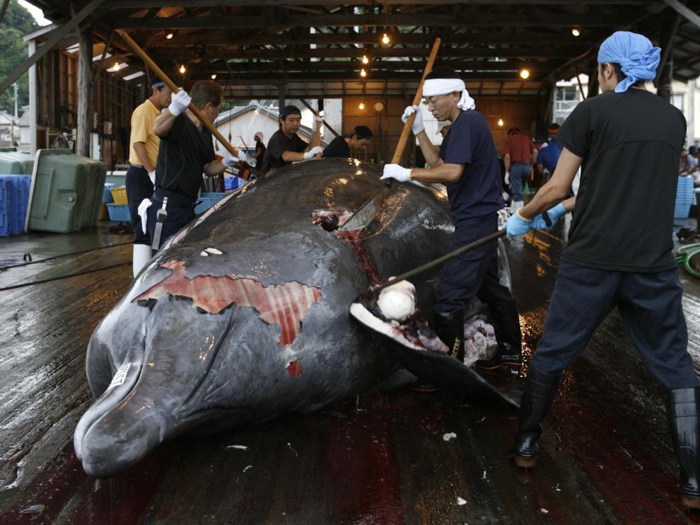 Un grupo de japoneses despiezando una ballena