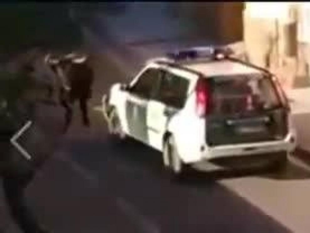 El toro sembró el pánico entre los vecinos