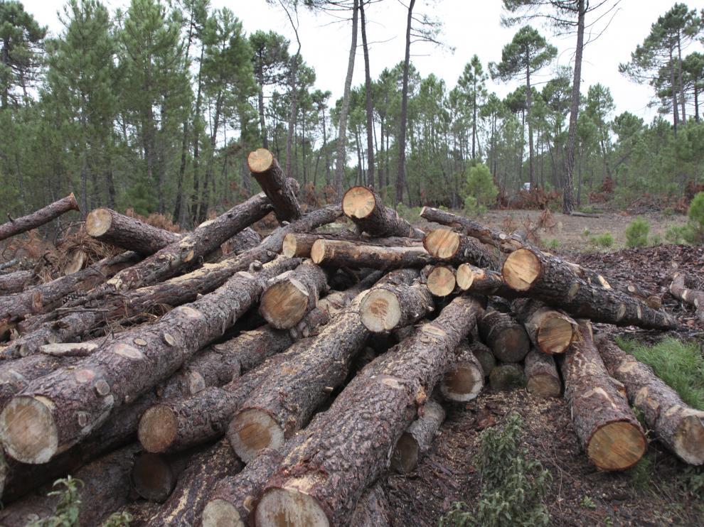 La comunidad genera unas 600.000 toneladas de biomasa forestal cada año.