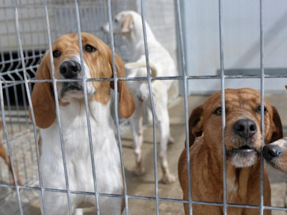 Foto de archivo de perros listos para ser dados en adopción