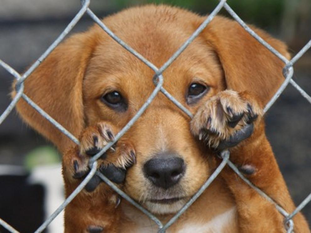 Habrá un espacio para adoptar perros