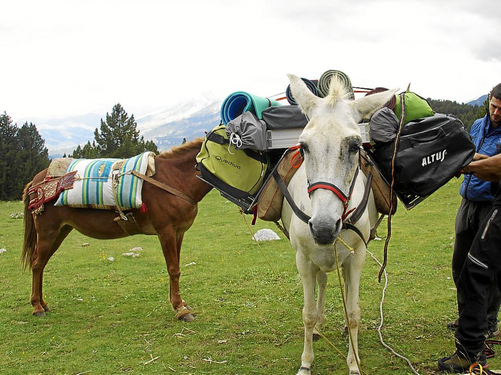 Kike Fernández carga una de las mulas para realizar un porteo.