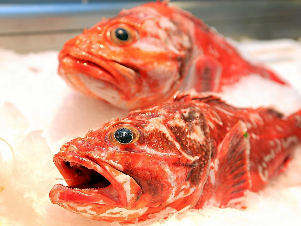 El cabracho es un pescado semigraso, de roca, de cuerpo robusto, alargado, cubierto de repliegues y espinas, con cola redondeada
