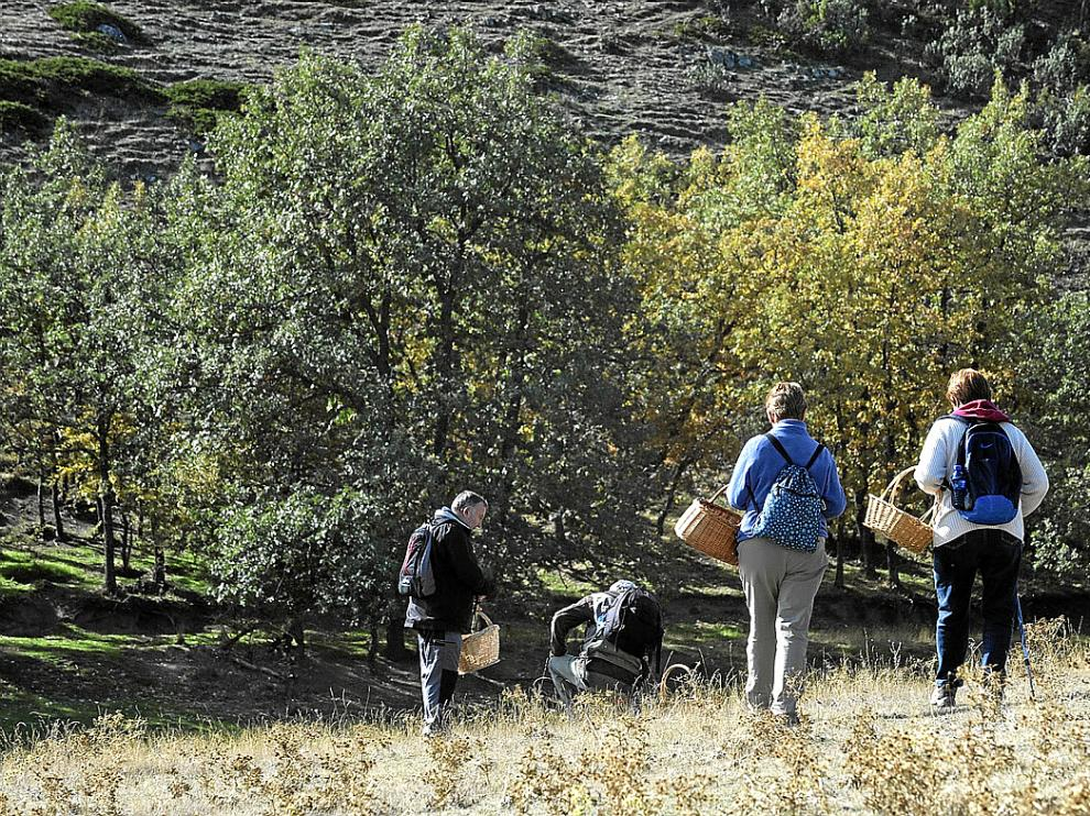Recolectores de setas en Torres de Albarracín, en la campaña del año pasado.