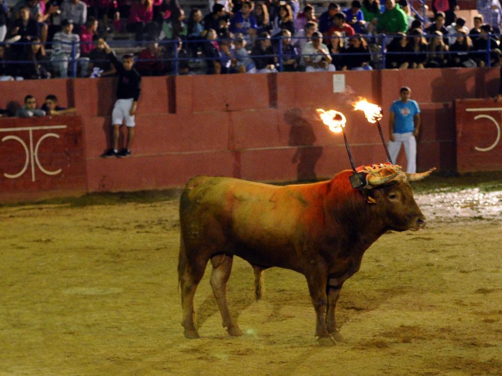 Imagen de archivo de un toro de ronda en la plaza de toros de Cariñena.