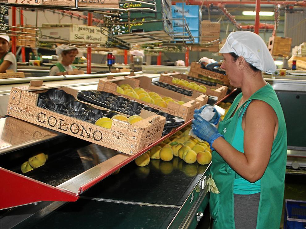 Una operaria trabaja en una planta, en la selección de Melocotón de Calanda.