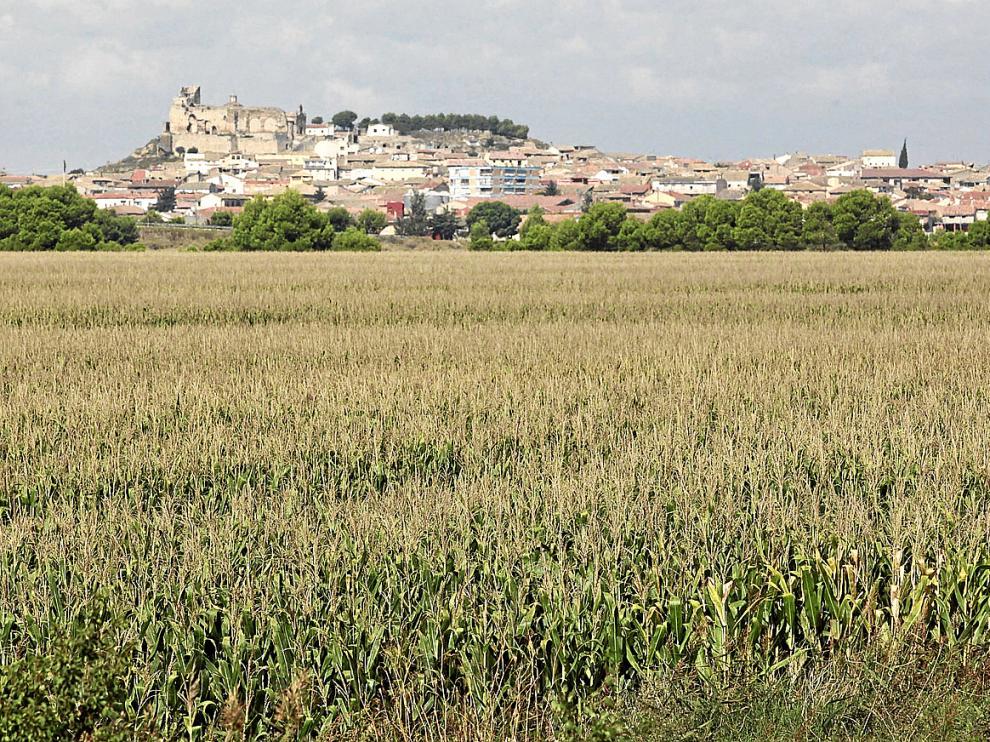 Campo de maíz de la pasada temporada