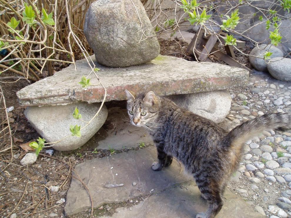 Gato callejero en Huesca