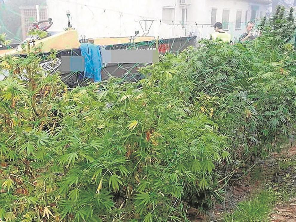 Alaska se convierte en el cuarto estado de EE. UU. en legalizar el cannabis