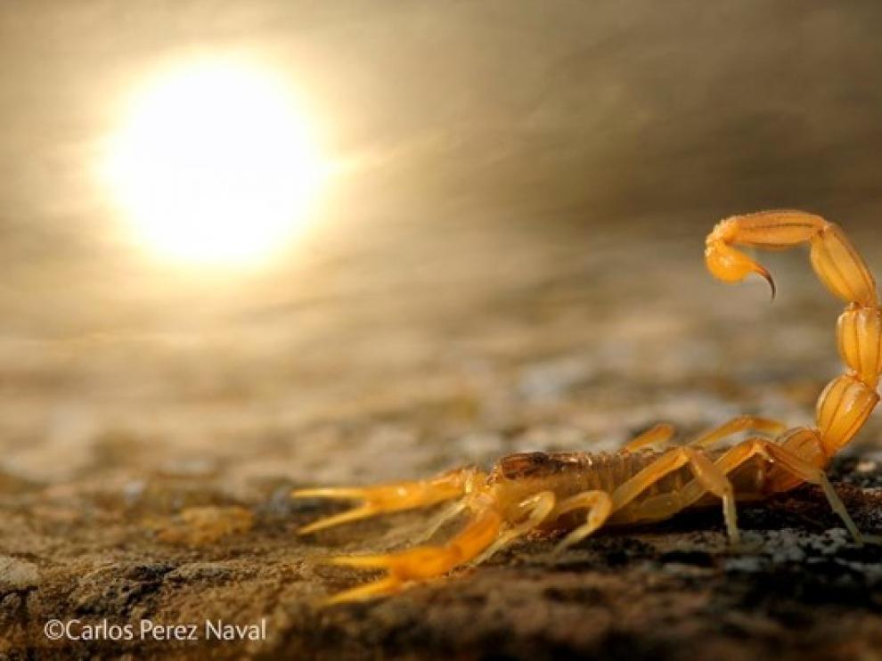 Foto premiada: 'Alacrán al sol'