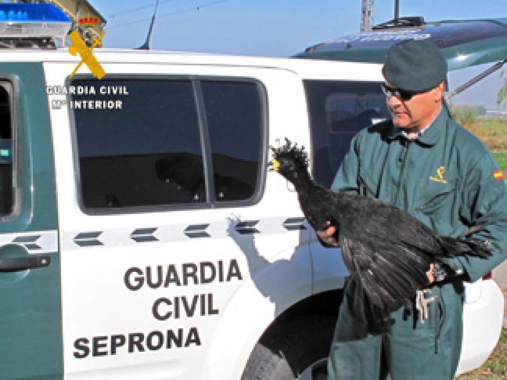 Desmantelado en Sariñena un zoo ilegal con especies exóticas