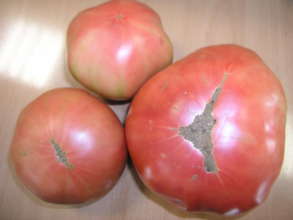 El ministerio de Industria concedió, en 2014, a la asociación de Hortelanos del Alto Aragón la marca nacional para el tomate rosa de Barbastro. Asociación de Hortelanos del Alto Aragón.