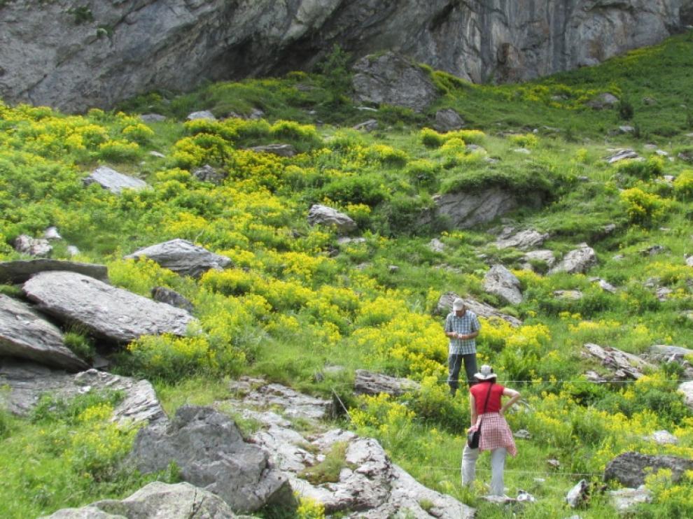 Voluntarios en el Pirineo
