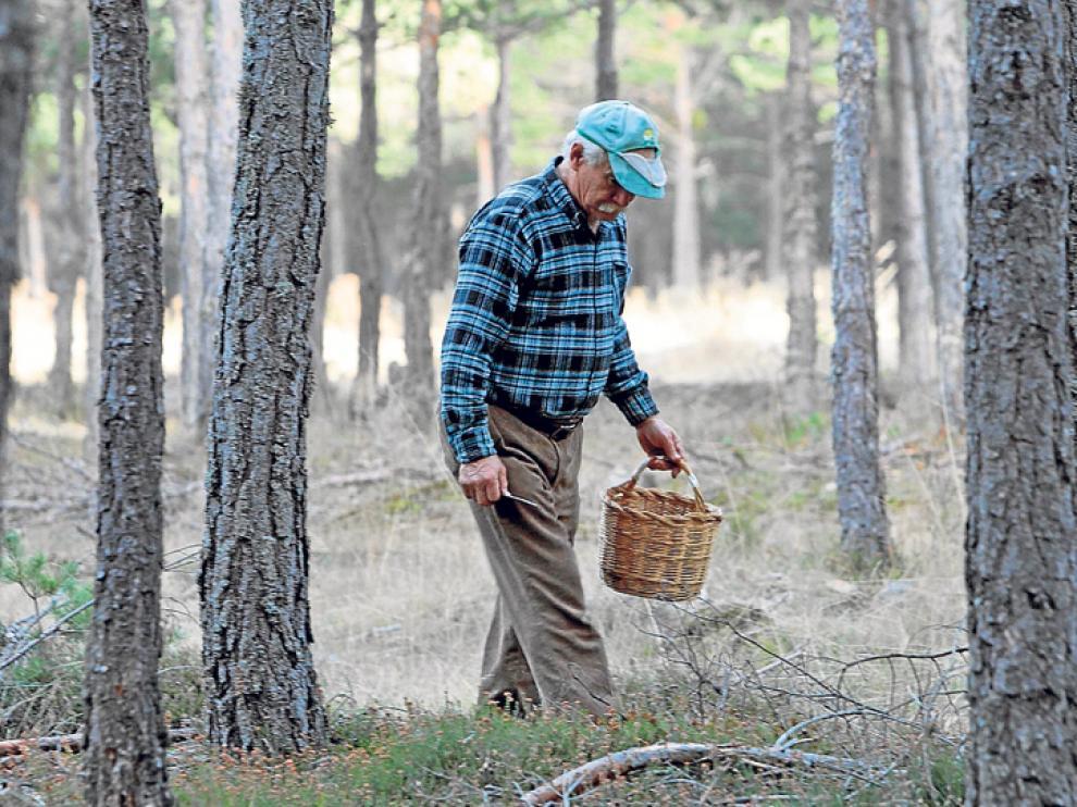 Un recolector en un monte de la provincia