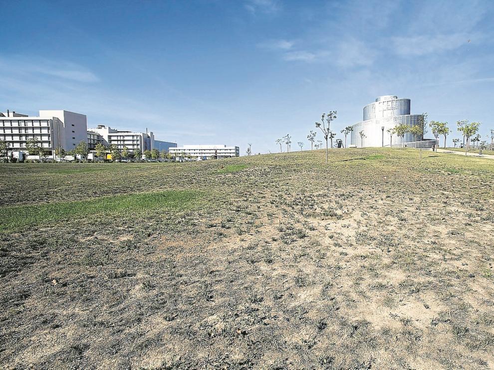 Las praderas de césped del parque lineal presentan numerosas calvas y zonas amarillentas por los recortes en la conservación.