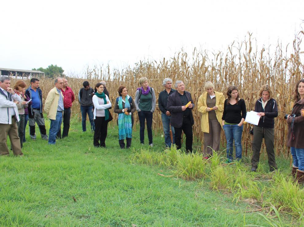 El grupo de investigadores y técnicos en un campo de experimentación en el cultivo del maíz de consumo humano.