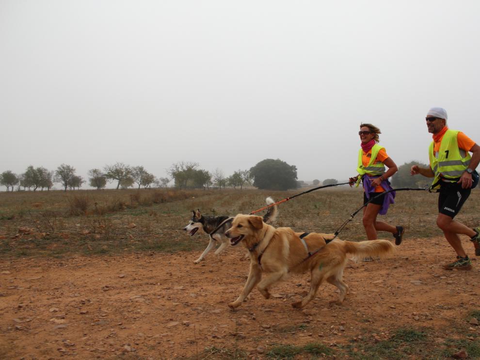 Éxito de participación en la III Carrera de Fuentes Claras con perros de tiro