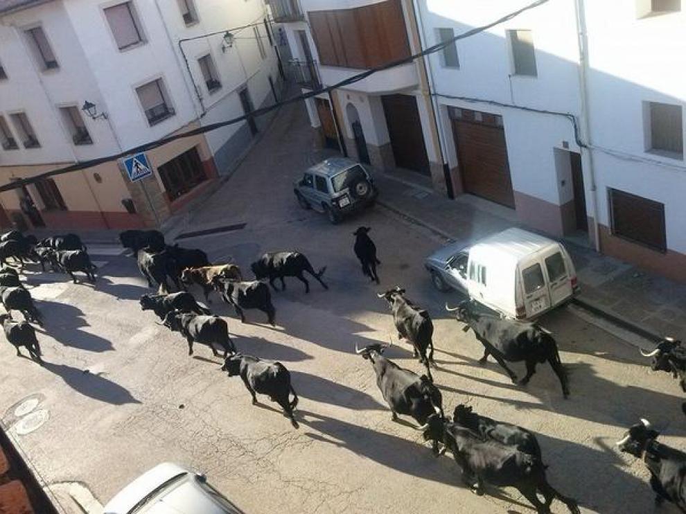 Un rebaño trashumante pasa por las calles de La Iglesuela del Cid camino de los pastos para invernar