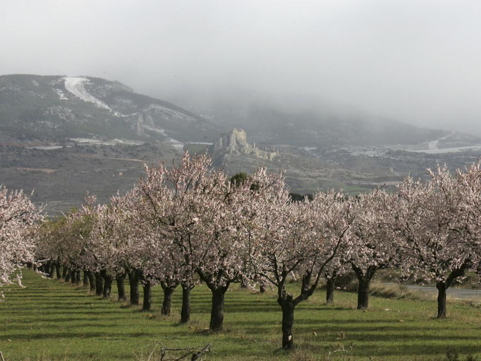 Imagen de archivo de árboles en flor. Algunas variedades de almendro están floreciendo antes de tiempo.