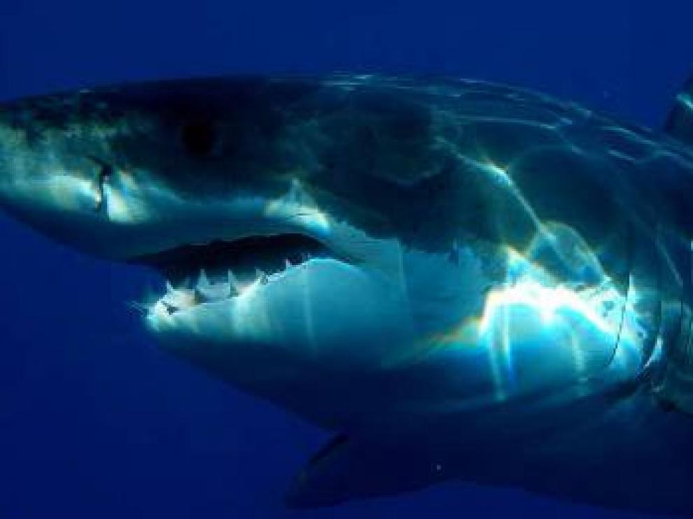 Según la versión del surfista, perdió el equilibrio en una ola y cayó encima del tiburón.