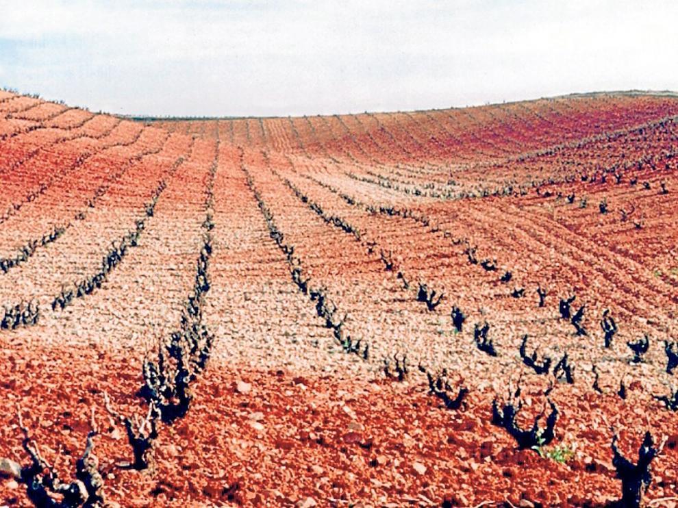 Los viñedos de la D. O. Cariñena han servido de modelo para un estudio sobre el cambio climático