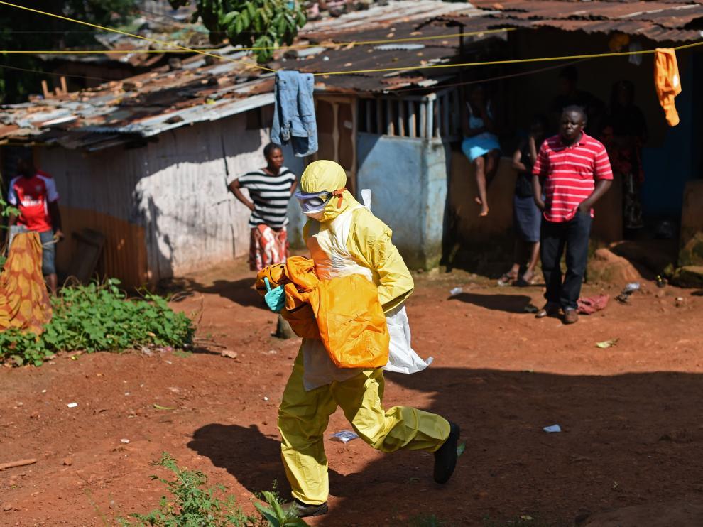 Un murciélago, posible desencadenante de la epidemia del ébola en África