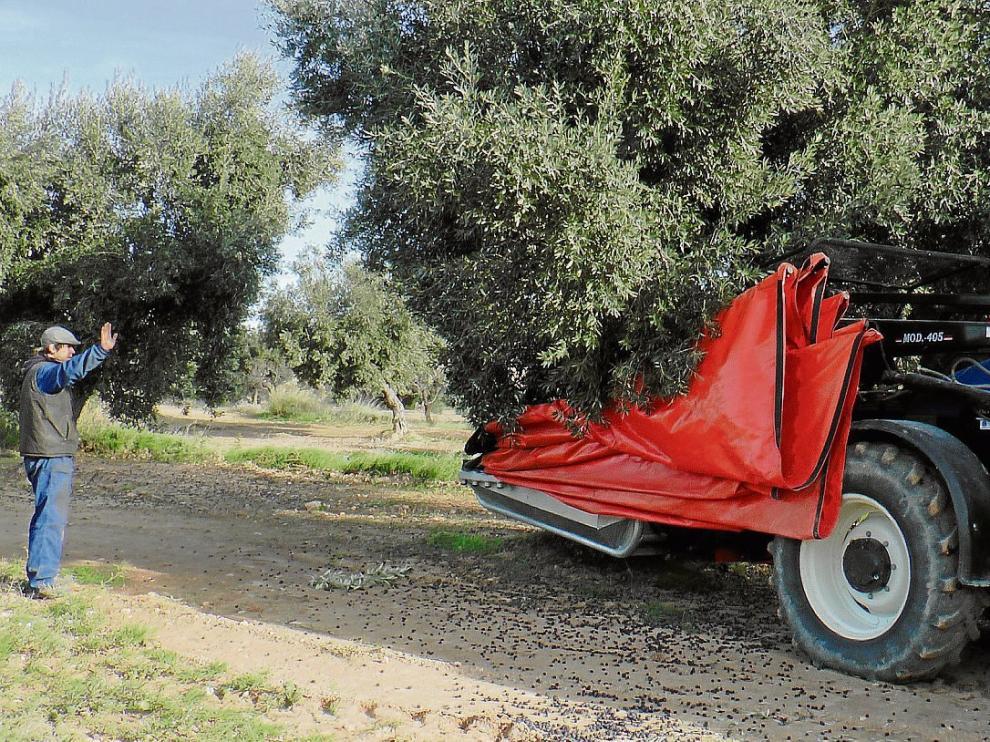 Un agricultor controla el proceso de recolección en una finca de Torrevelilla