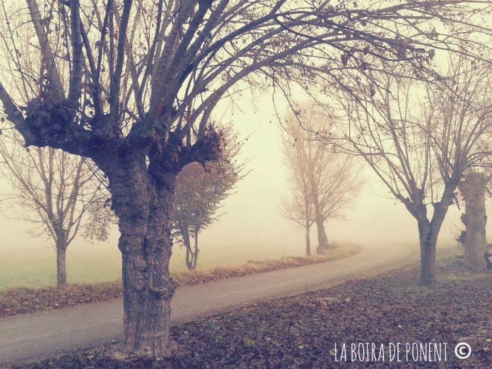 Así embellece la niebla el paisaje en estas localidades leridanas