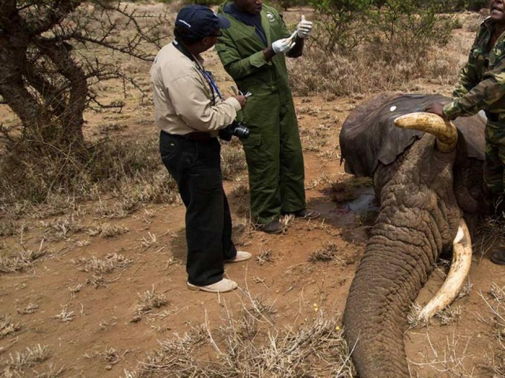 Construyen un dron para salvar rinocerontes y elefantes de la caza furtiva