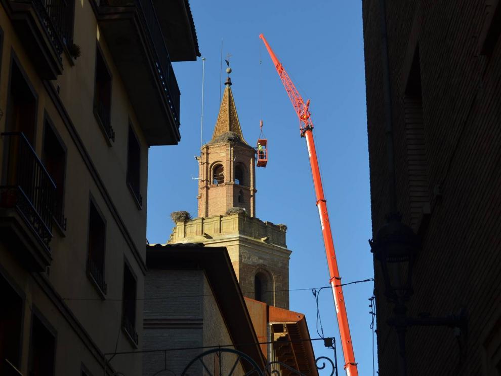 Trabajos de retirada de los nidos de la torre de la catedral.