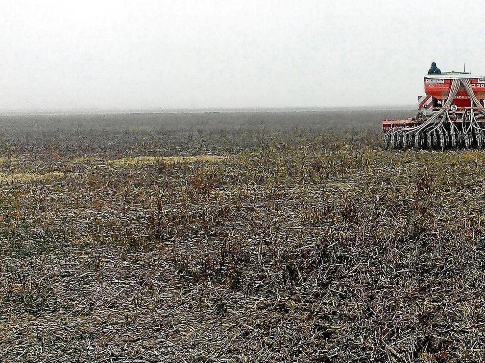 Siembra directa de trigo en un campo aragonés