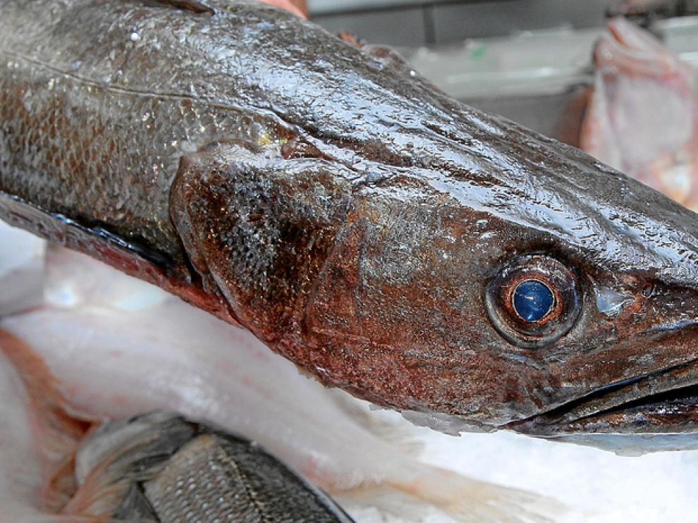 Ejemplar de merluza en una pescadería de Zaragoza