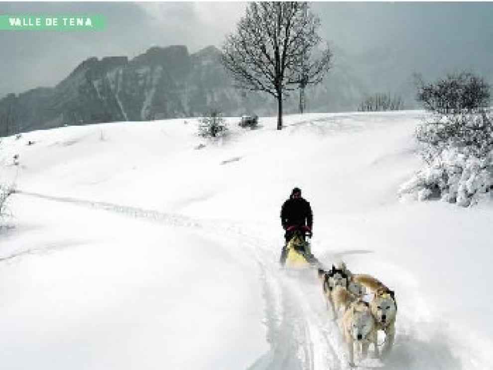 Pilotar por la nieve un trineo tirado por perros es posible en Formigal.