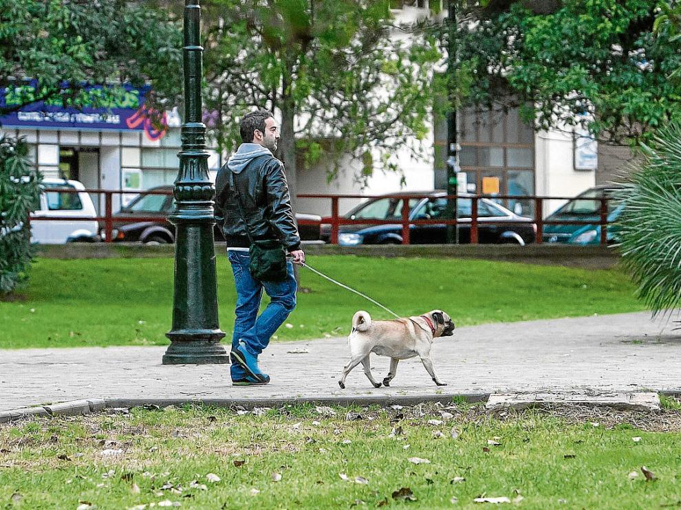 El Ayuntamiento estudia crear un banco de ADN para facilitar la identificación de los perros