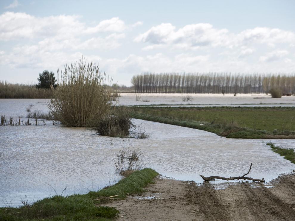 Punta de la crecida, este miércoles en la Ribera Alta del Ebro