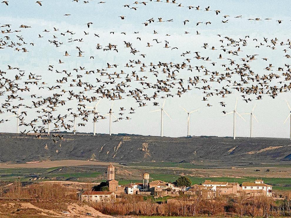 Las grullas sobrevolaron ayer el pueblo de Montmesa, junto al embalse de La Sotonera.