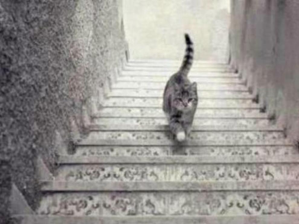 ¿Este gato sube o baja las escaleras?