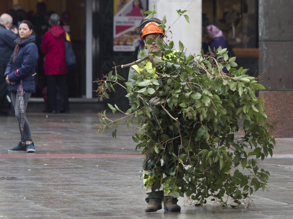 Un trabajador de jardines, en plena poda