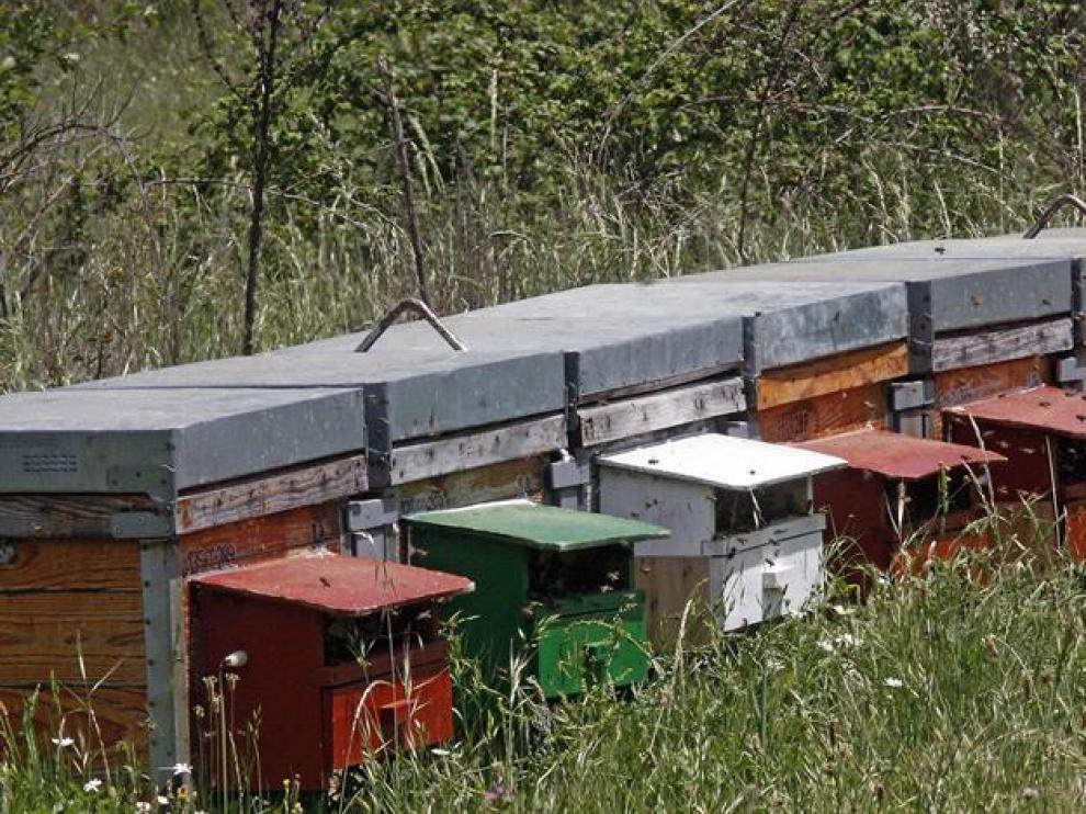En la imagen, las colmenas ubicadas en la zona de La Serrana de Serradilla del Arroyo, cerca del lugar donde se produjo el ataque