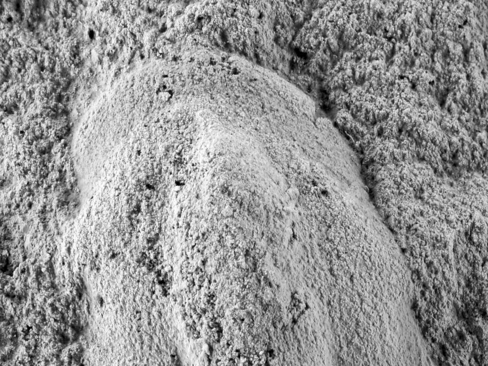 Imagen del que puede ser el fosil de trilobite más antiguo del mundo