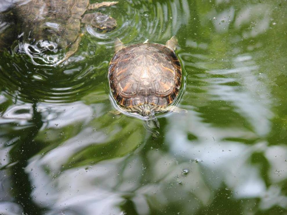 El falso paraíso de las tortugas de la estación de Atocha.