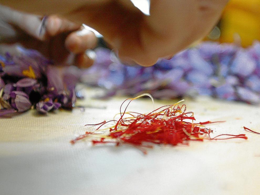 El azafrán del Jiloca ha ocupado un lugar destacado entre los productos agroalimentarios.
