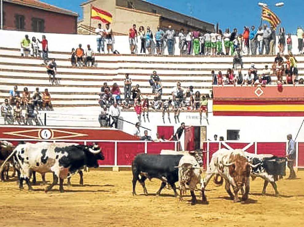 Los astados, en el momento en el que llegaron ayer a la plaza de toros tras el encierro.