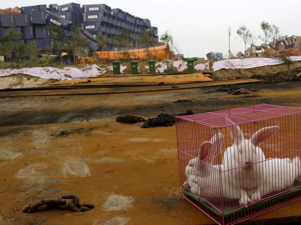 Dos conejos en una jaula depositada junto al lugar de Tianjin donde se produjo la explosión para observar las condiciones de vida del lugar.