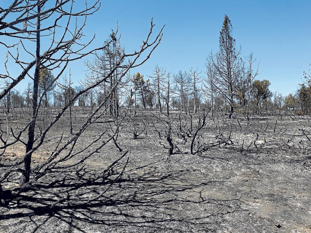 Las llamas calcinaron alrededor de 567 hectáreas.