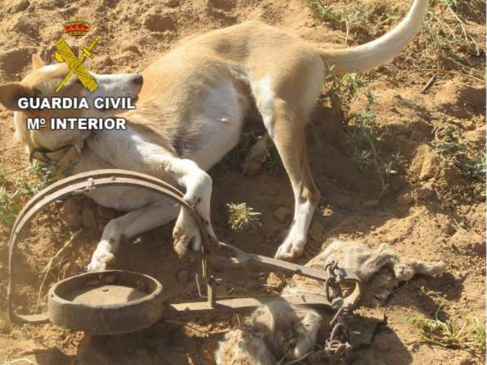 Tras liberar al perro, los agentes del Seprona identificaron a su dueño y se lo entregaron.
