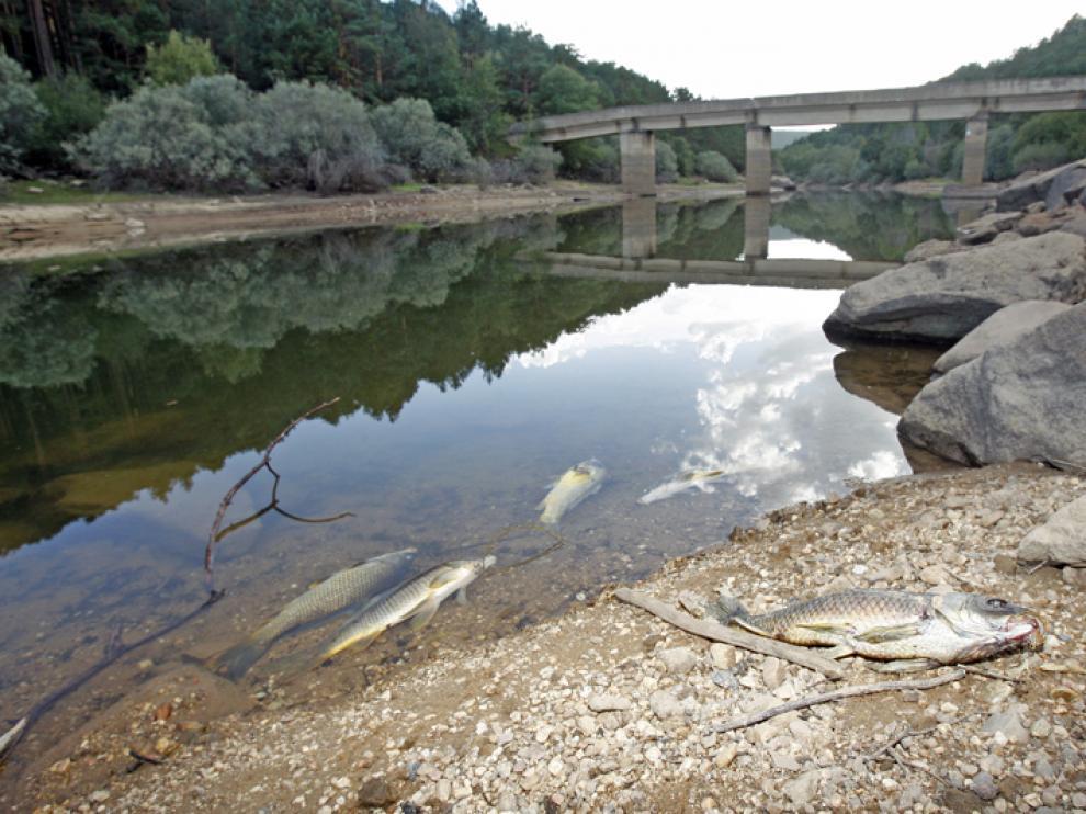 Peces muertos en el pantano
