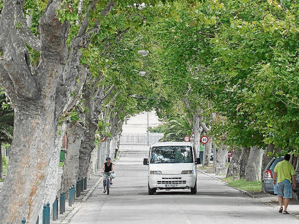 El Justicia pide que se respeten los árboles de Casetas. La renovación de servicios de la avenida de la Constitución de Casetas obligará a talar, al menos, 19 árboles de gran tamaño.